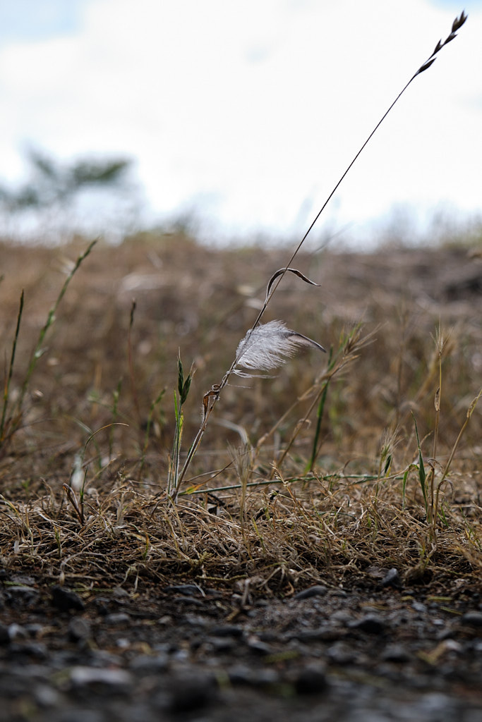 A small feather hanging onto a piece of straw